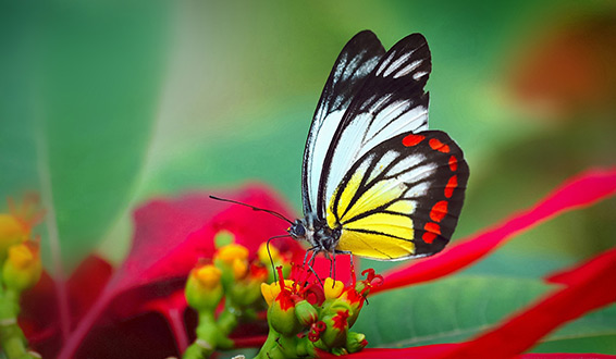 A red and yellow butterfly on a flower